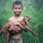 da proteggere animali 1
