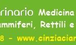 cinzia sito