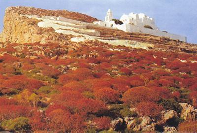 Φωτ.: Το «χαλί» των φρυγάνων, με τα χρώματα και τις ευωδιές του, στρωμένο μπρος από την εκκλησιά της Παναγιάς στη Φολέγανδρο.