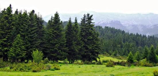 www.pertouliforest.gr