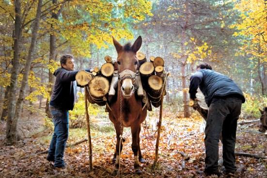 ΦΩTOΓΡAΦIΑ: ΠΕΡΙΚΛΗΣ ΜΕΡΑΚΟΣ periklesmerakos.com