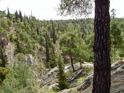 1.Δάσος του Κεδρηνού Λόφου: Ένα φυσικό οικοσύστημα δημιουργημένο από τον άνθρωπο (φωτογραφία από το διαδίκτυο)