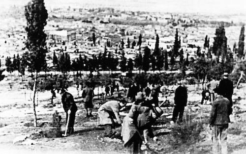 Φυτεύσεις στο Λόφο του Αστεροσκοπείου από τη δασική υπηρεσία, με συμμετοχή πολιτών (από το αρχείο του συγγραφέα)
