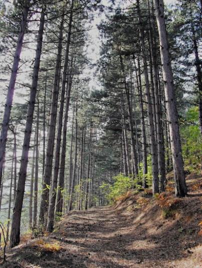 Δάση υψηλά ξυλοπονικώς εκμεταλλευόμενα (από το αρχείο του συγγραφέα)