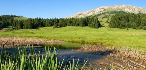 Αποτέλεσμα εικόνας για φυσικού περιβάλλοντος και της βιοποικιλότητας στις περιοχές Natura