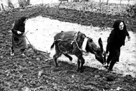 Γυναίκες του κουράγιου, μαυροντυμένες, χωρίς του αντρός τη συνδρομή, παλεύουν με τον εξαντλημένο γαΐδαράκο τους να καρπίσουν το μικρό φτωχικό αγρό, κάπου στην Ήπειρο το 1950. Ηρωΐδες της ζωής, μάνες της γης.
