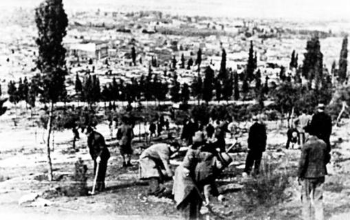 Προσπάθεια πρασινισμού ενός ακόμη ξηρού λόφου της Αθήνας: Αναδάσωση στο Λόφο του Αστεροσκοπείου.