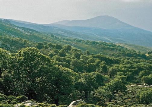 Σε συγκεκριμένες περιοχές της χώρας, όπως εν προκειμένω στην Κρήτη, το ελληνικό δημόσιο οφείλει ν' αποδείξει την κυριότητά του επί των δασών και δασικών εκτάσεων (από το αρχείο του συγγραφέα).