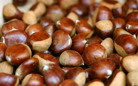 Closeup of ripe brown chestnuts.