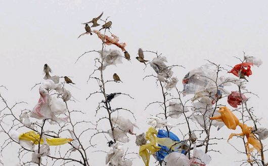 plastic-bags-with-birds-on-a-tree-in-China