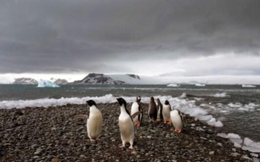 antarktiki pigkouinoi