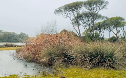 Το παράνομο κυνήγι στη λιμνοθάλασσα Κοτυχίου και στη γειτονική λίμνη Προκόπου καταγγέλλουν φορείς της Δ. Ελλάδας και η Ορνιθολογική Εταιρεία.