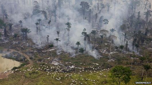 tropiko dasos apopsilosi