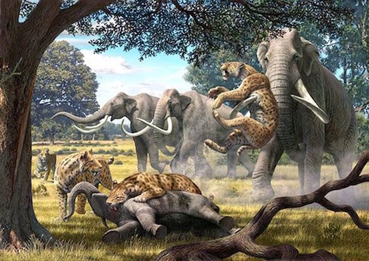 elefantes_ailouroeidi