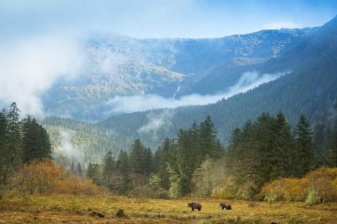 dasos_Great Bear Rainforest