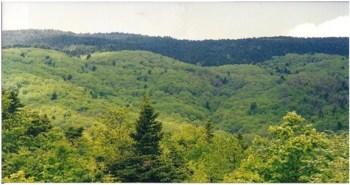Ορεινές πλήρως δασωμένες υδρολογικές λεκάνες στην Ευρυτανία