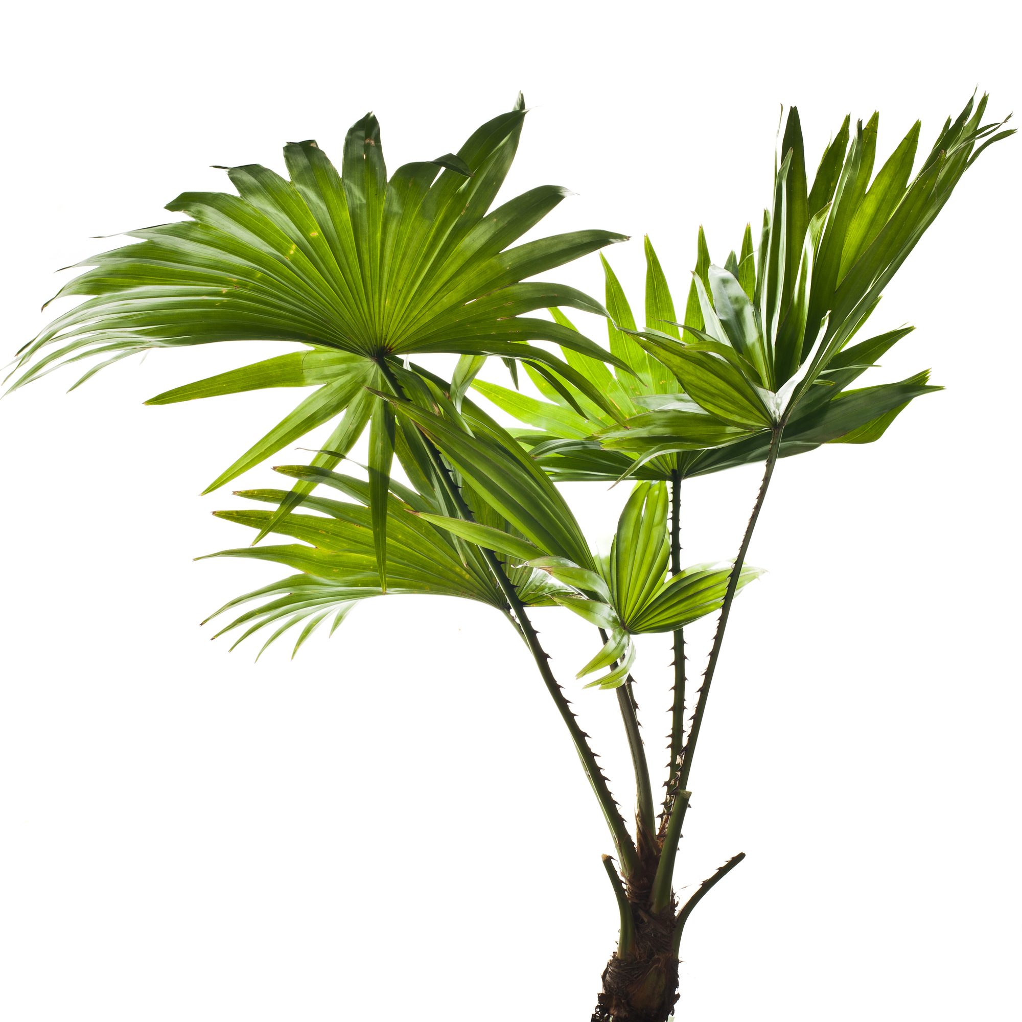 Thoughtful Reasons To Give A Tropical Plant As A Christmas