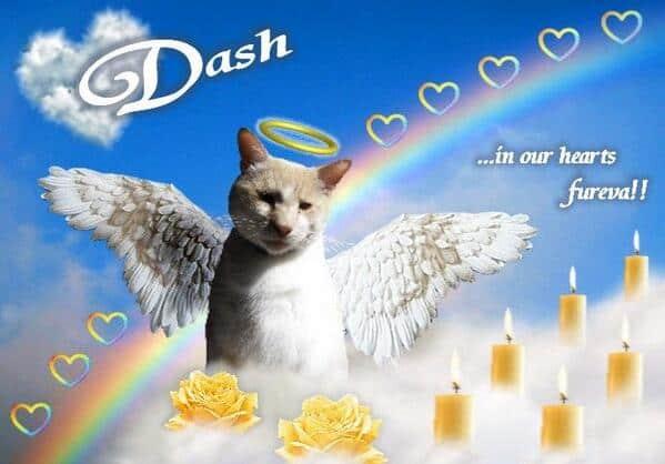 Angel Dash Kitten Memorial Image 1