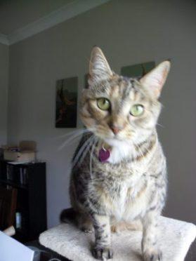 Dot Kitten