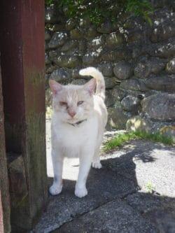 Dash Kitten Blog Founder Cat