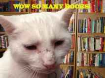 Library cat image