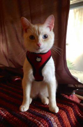 Yanni Ross, Kitten © Anne Ross
