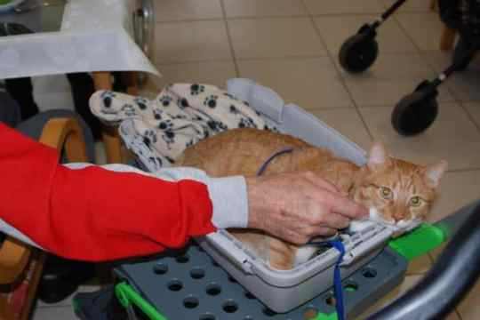I-CAT Therapy Cat in Germany