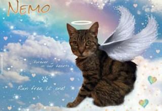 Nemo Angel Cat