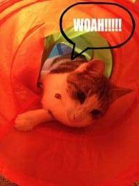 Rescued Cat Book
