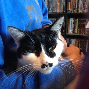 Natasha Classic Tuxedo cat