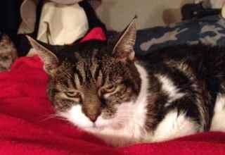 Peanut Senior cat