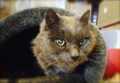 A Senior Cat Enjoys a New Life