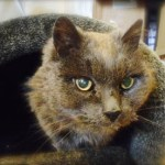 Dash Kitten Blog Dusty
