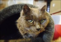A Senior Cat Enjoys a New Life