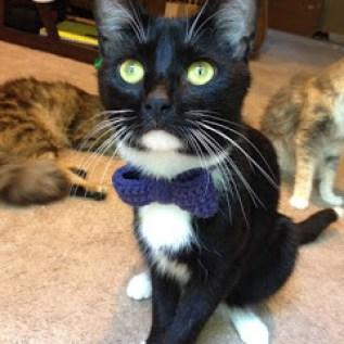 Kitty Cat Chronicles Samson