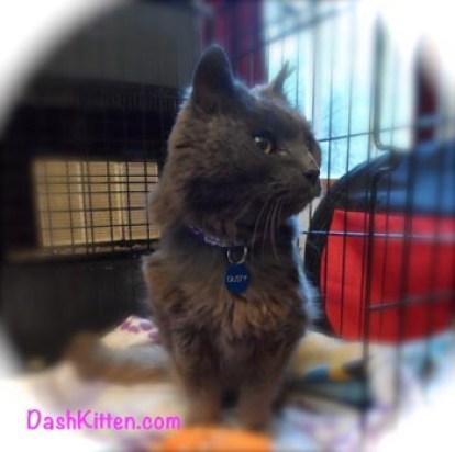 Dusty Senior Cat