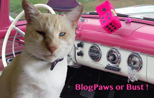 BlogPaws or Bust Competition Dash Kitten