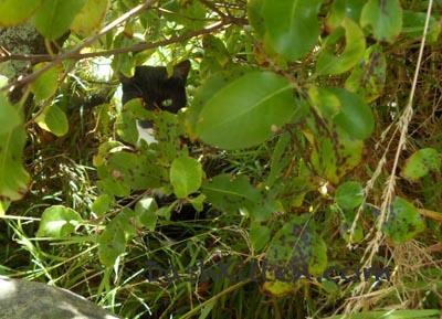 Upper Hutt's Animal Rescue