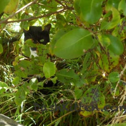 Cat hiding in bushes