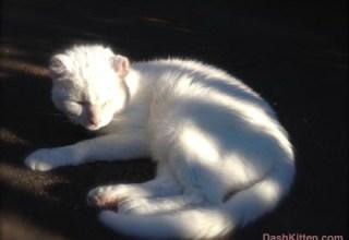 Sunshine Kitty in th Sun