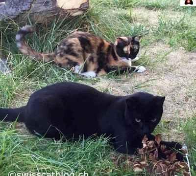 worldwide Pet Blogging Pixie and Zorro Swiss Cats