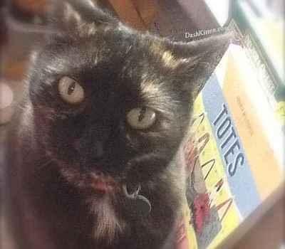 Tortie Cat Sienna