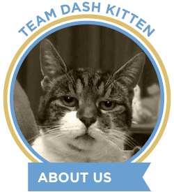 About Dash Kitten Blog