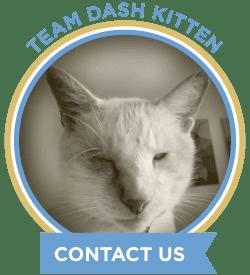 New Look Dash Kitten