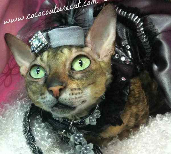 Coco the Couture Cat models an handmade hat