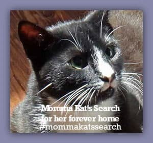 Mommakatsearch is a hashtag to help a cat in need.