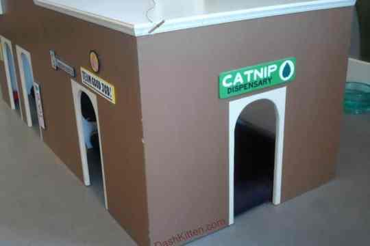 CatTown Oakland, CA.