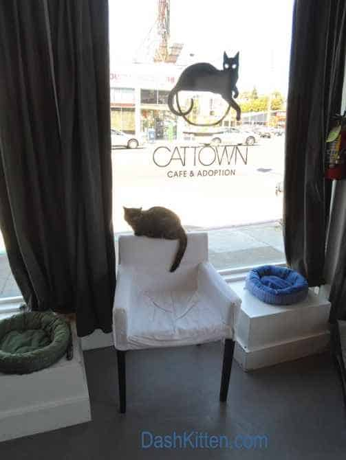 Cat Town San Francisco
