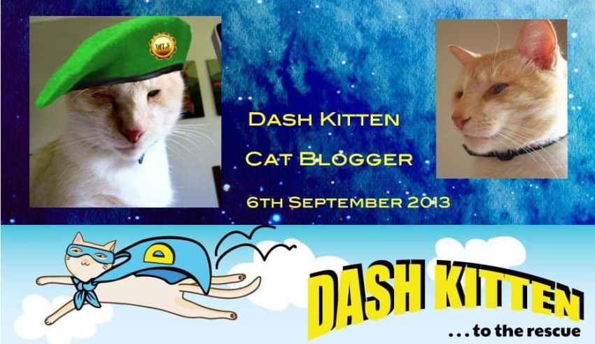 Dash Kitten memorial graphic