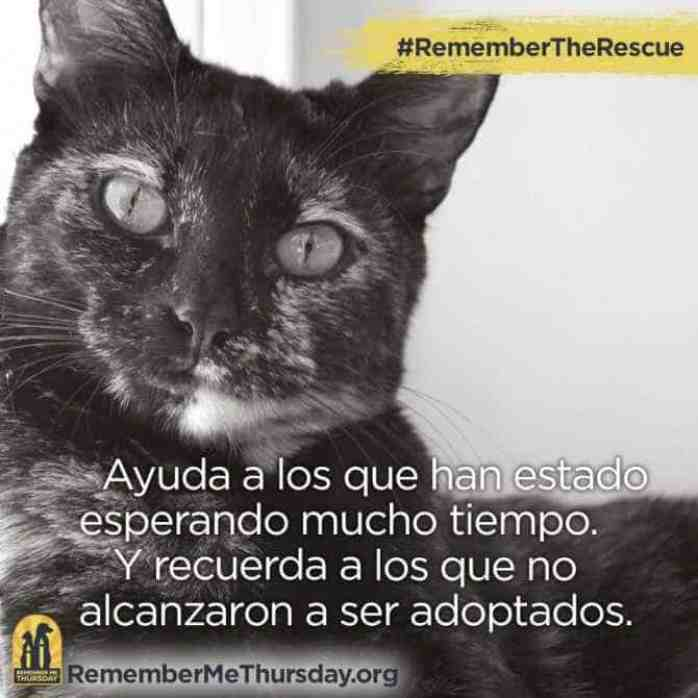 #RememberTheRescue IS worldwide - There are shareable images in Spanish and German text.